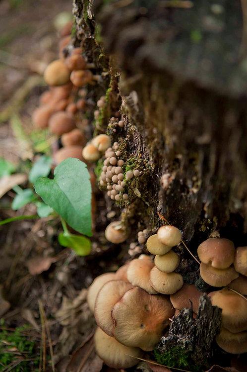 Mushroom Mythology II | Sonia Horowitz