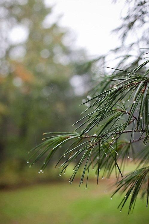 Autumn in the Herb Garden: Honoring the Changing Seasons | Rebekah Dawn