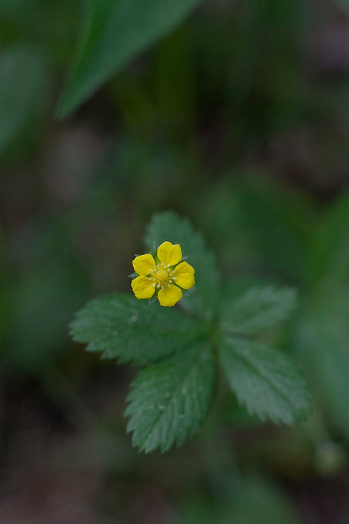 Welcome to Herbalism - Linda Conroy