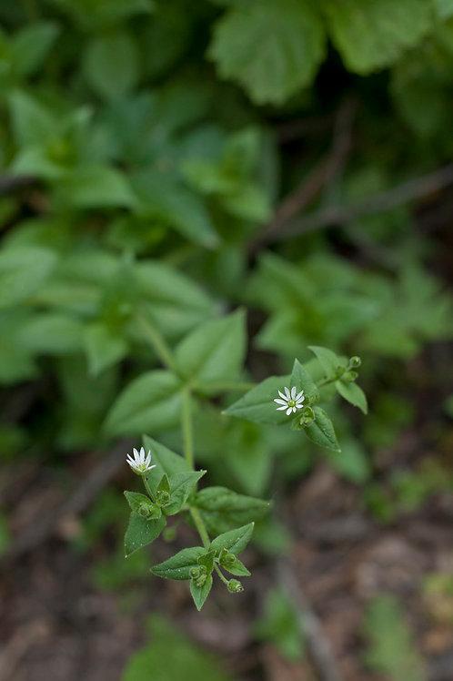 Farm to Face with Calendula Officinalis | Barbara Bitondo