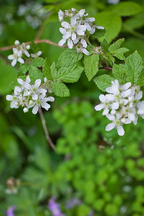 Using Herbs As Dye   Marguerite Ramlow