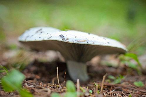 Mushroom ID 101 | Sarah Foltz Jordan