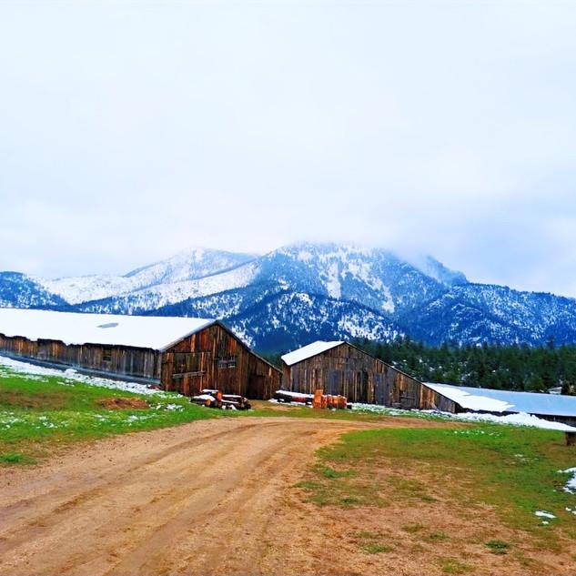 Walker Ranch - Silo and granary, 1998