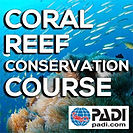PADI-Coral-Reef-Conservation-Course.jpg