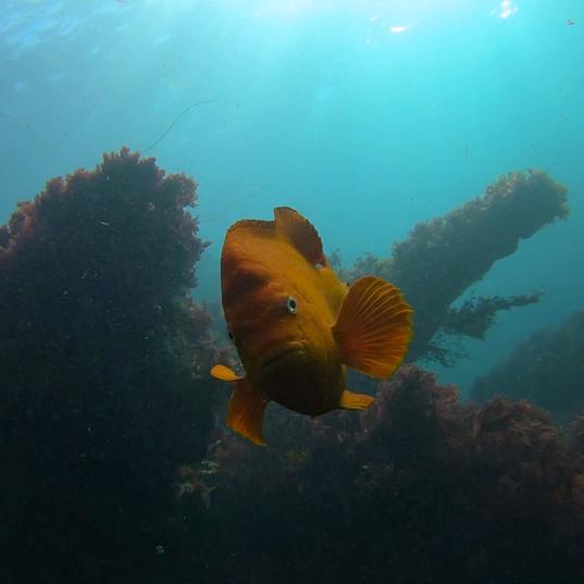 洛杉矶南加州潜水