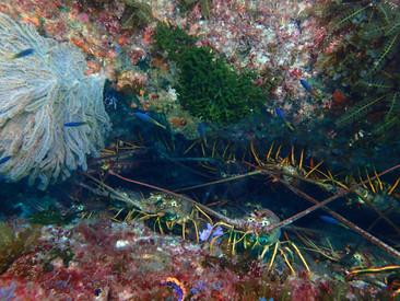 洛杉磯潛水執照洛杉矶学潜水