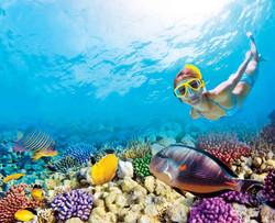 reef-experience-snorkel-arrecife-puerto-