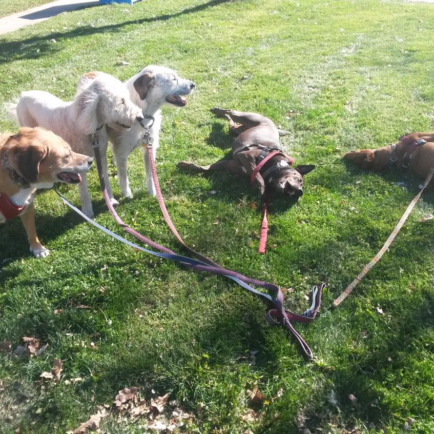 Cooper, Zoey, Griff, Coco, Mamacita