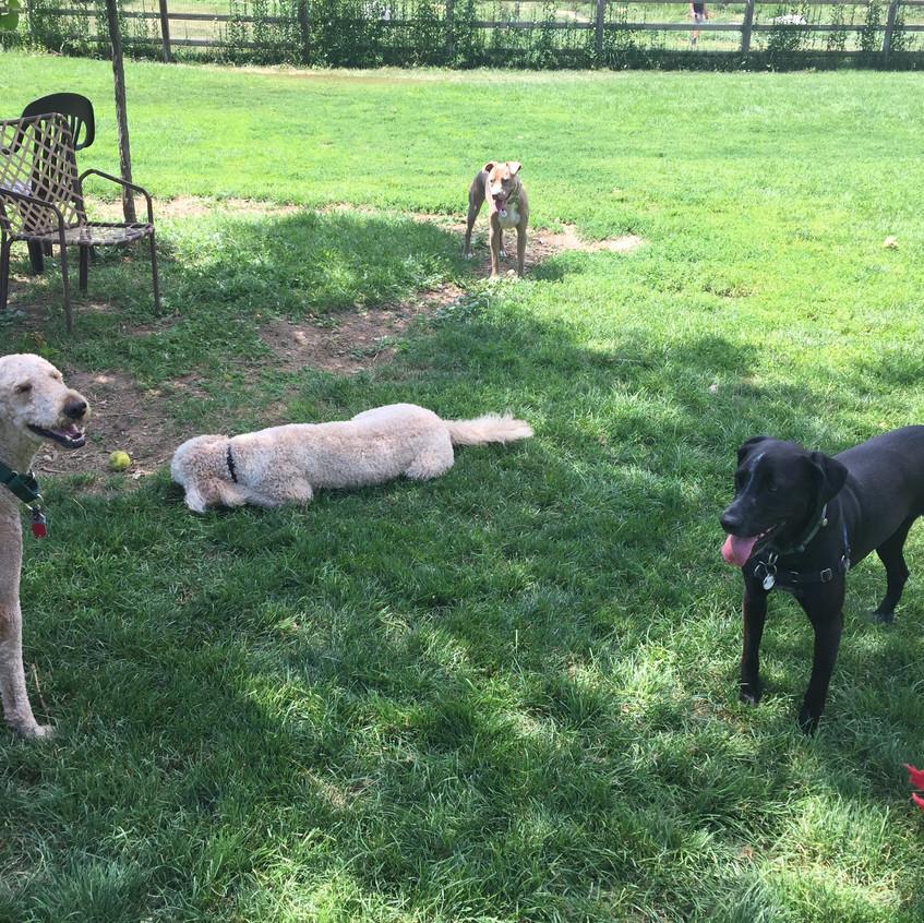 Milo, Zoey, Rey, Avo