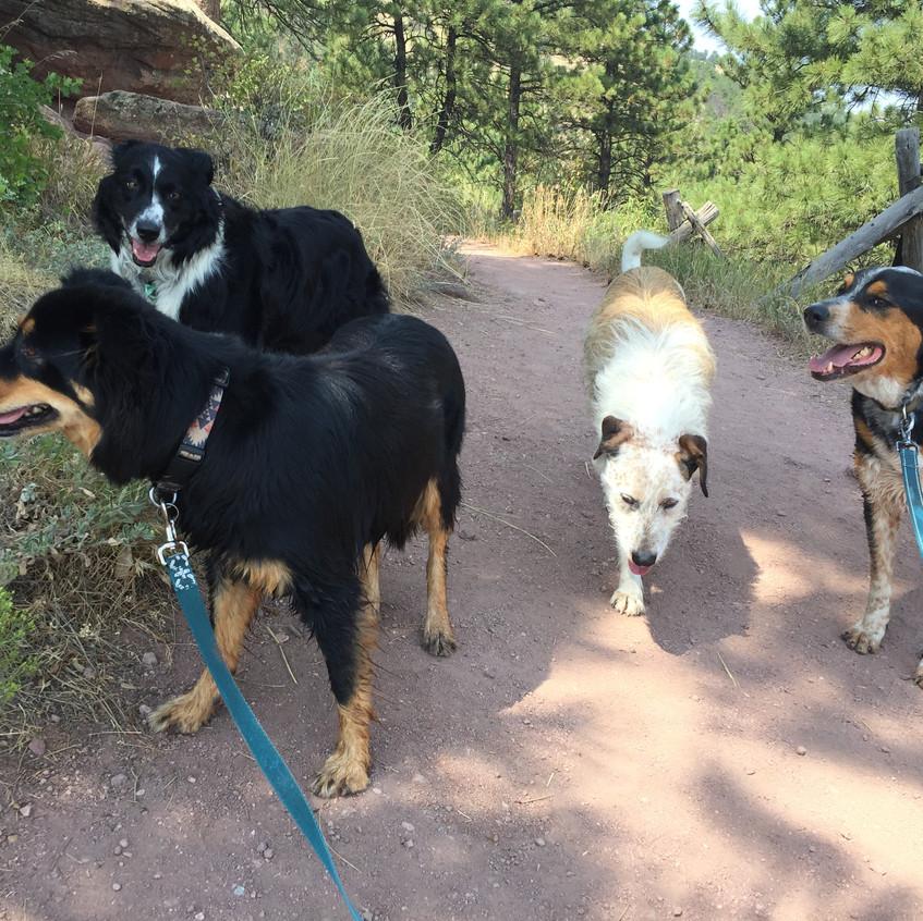 Riley, Ruffers, Griff, Sputnik