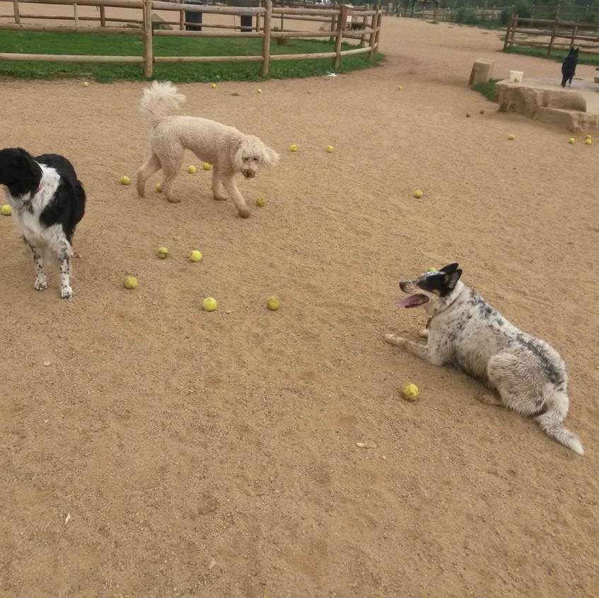 Ruffers, Zoey, Isaac