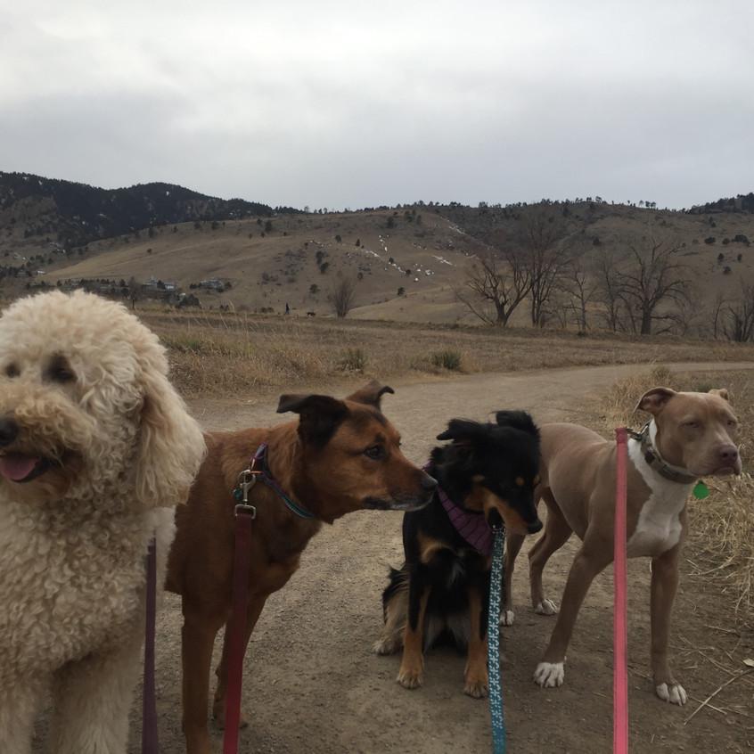 Zoey, Ruby, Riley, Rey