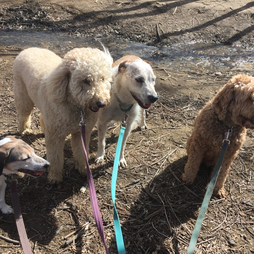 Stella, Zoey, Griff, Roger Roger