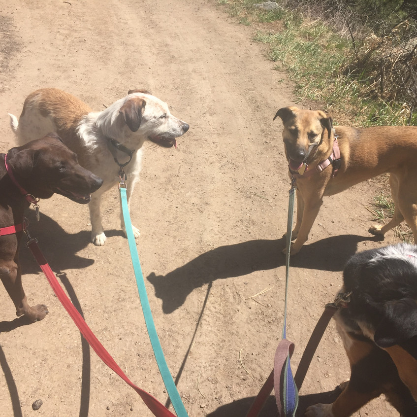 Coco, Griff, Colby, Sputnik