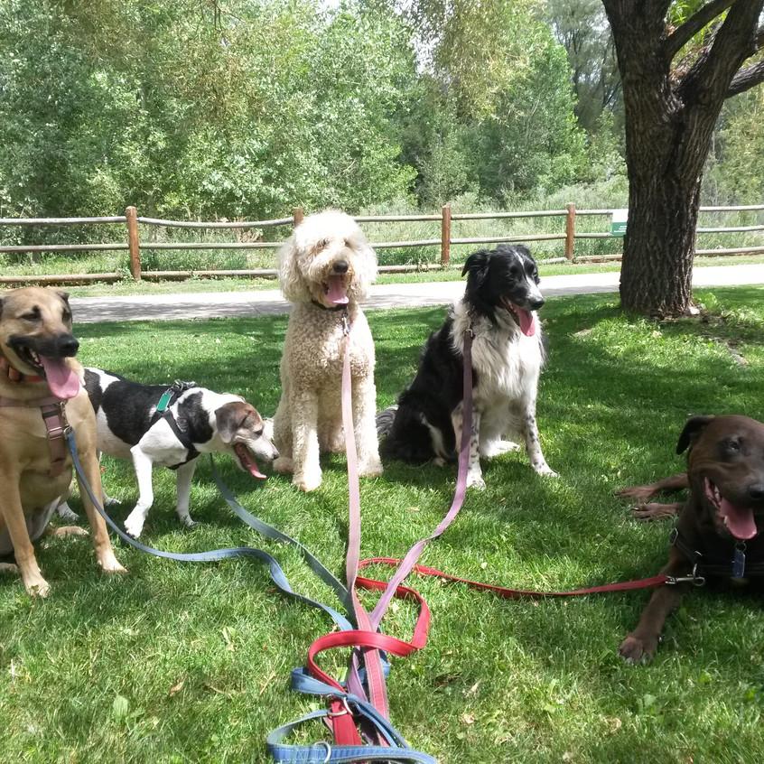 Colby, Stella, Zoey, Ruffers, Coco