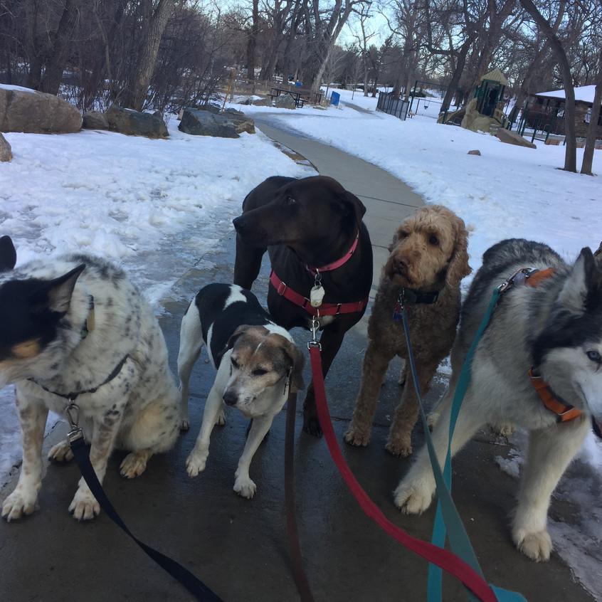 Isaac, Stella, Coco, RR, Thompson