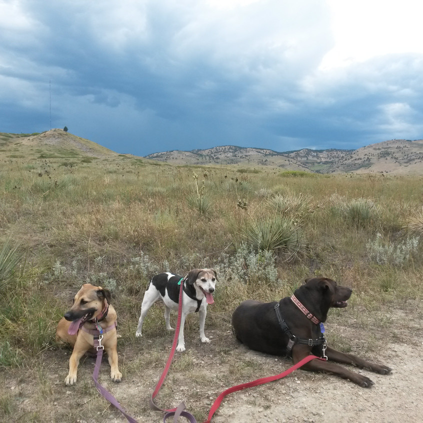 Colby, Stella, Coco