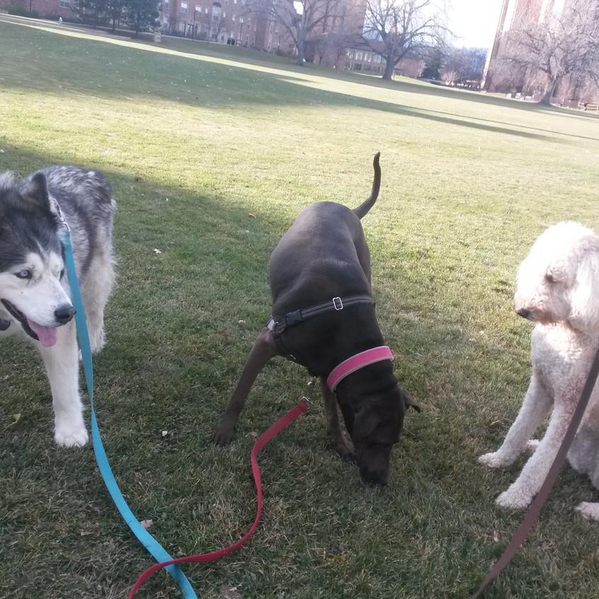 Thompson, Coco, Zoey