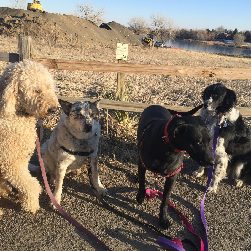 Zoey, Isaac, Poppy, Ruffers