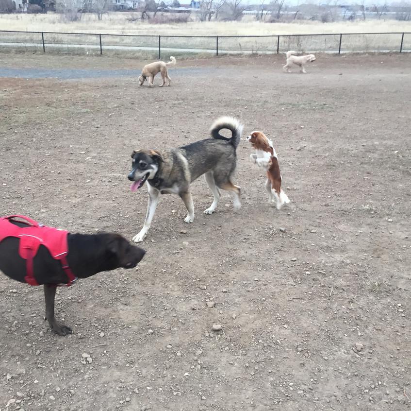 Coco, friend, Zoe, Milo, Zoey