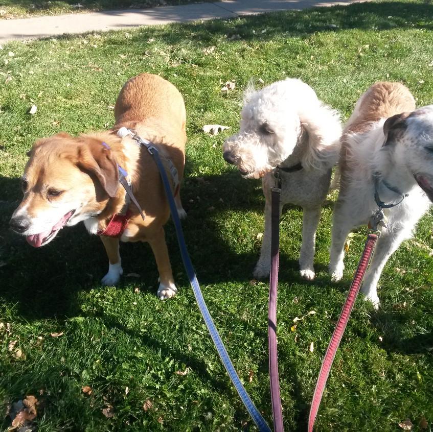 Cooper, Zoey, Griff