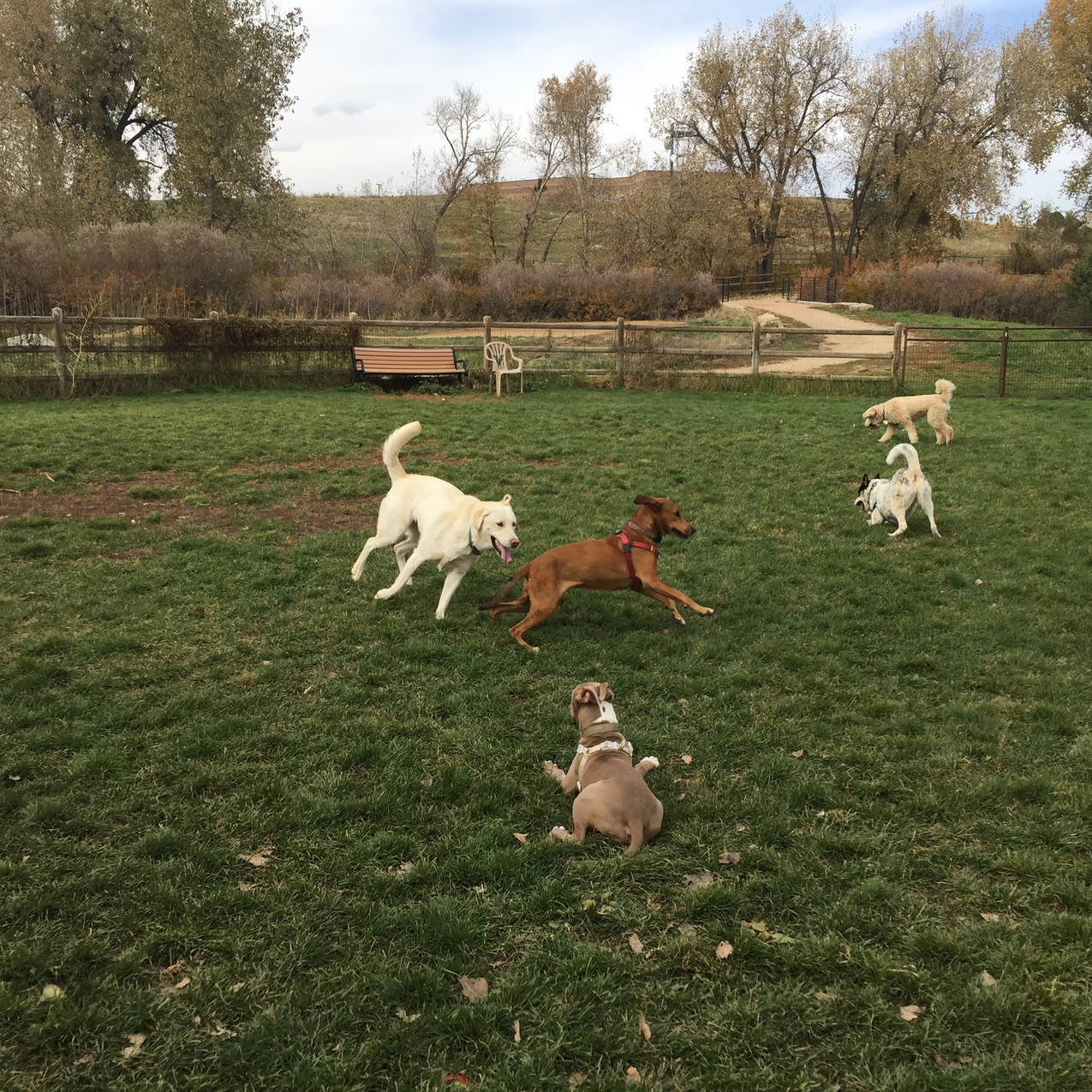 friend,Mama,Rey,Isaac,Zoey