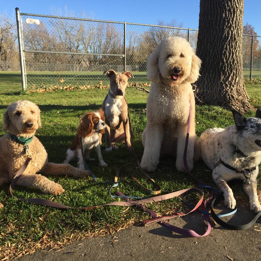 Milo, Zoe, Rey, Zoey, Isaac