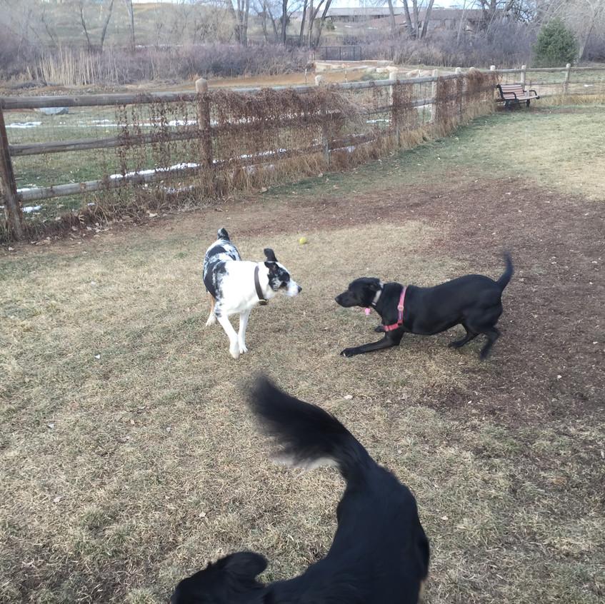 friend, Poppy, Riley