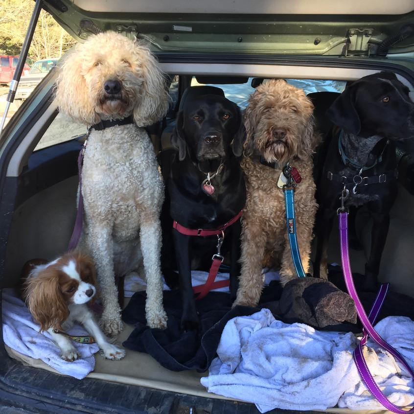 Zoe,Zoey,Racer,RogerRgoer,Avo