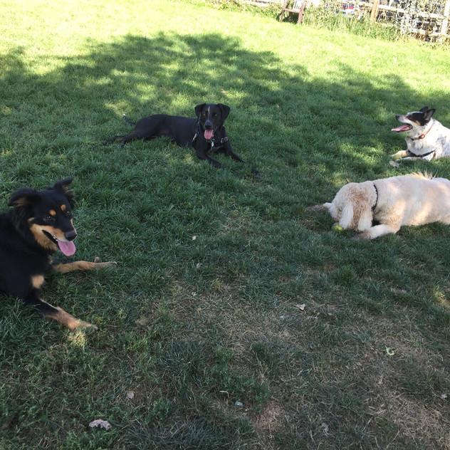 Riley, Avo, Zoey, Isaac