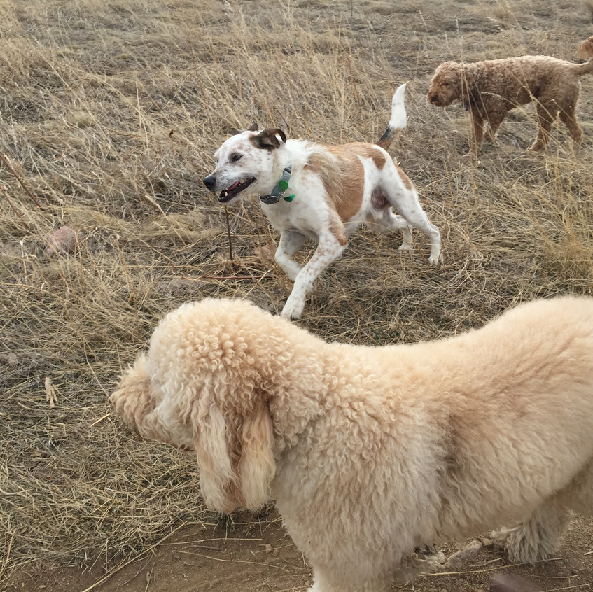 Zoey, Griff, Roger Roger