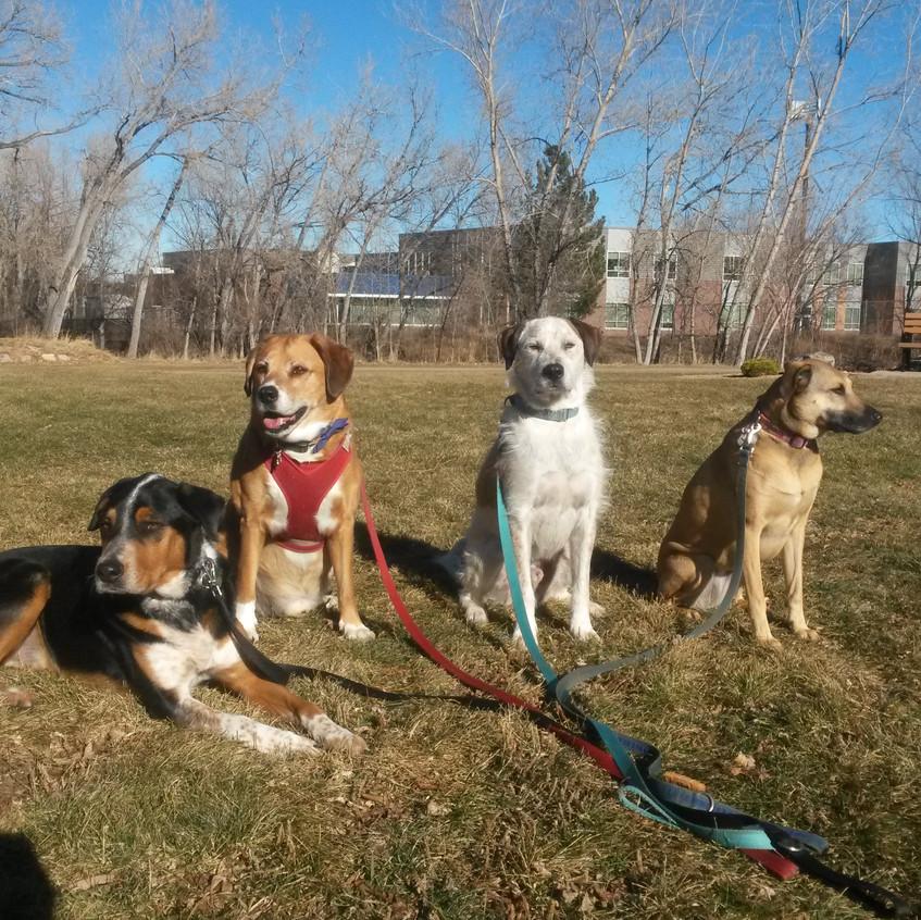 Sputnik, Cooper, Griff, Colby