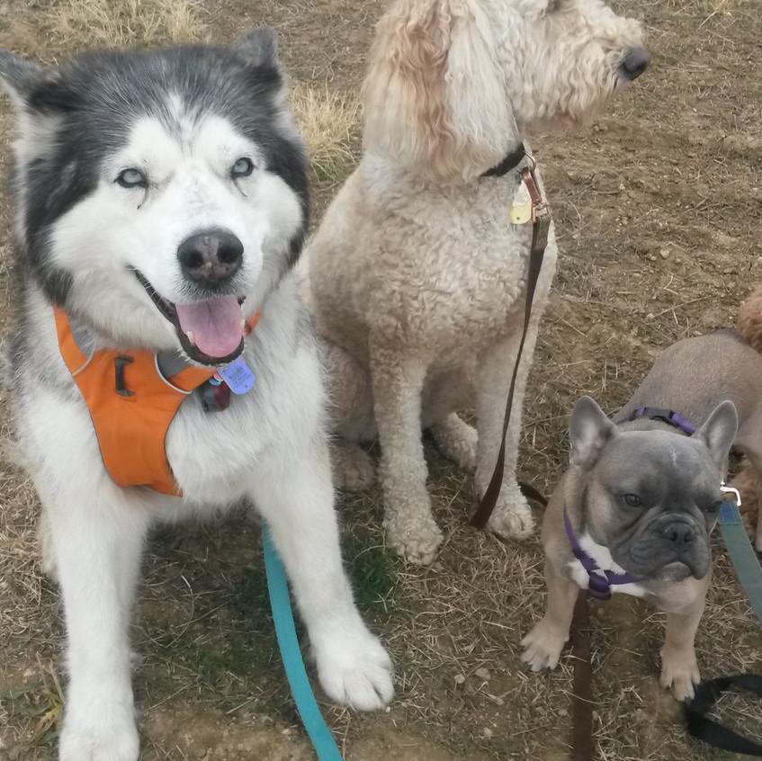 Thompson, Zoey, Blu