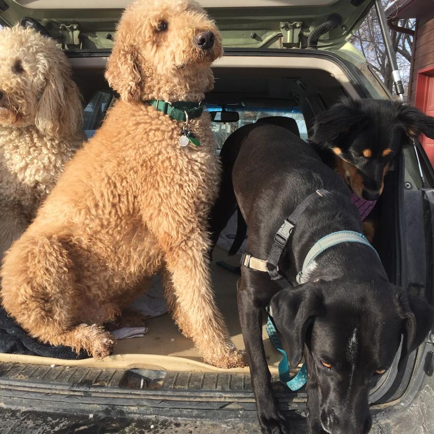 Zoey, Milo, Avo, Riley