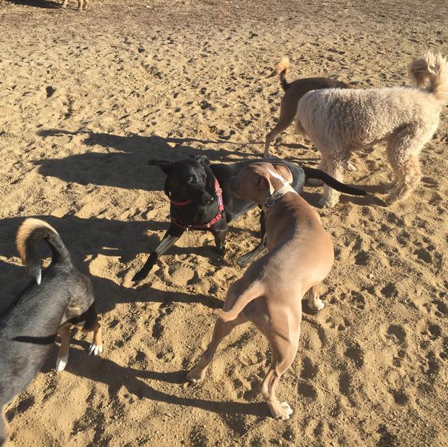 friend, Poppy, Rey, Zoey, friend
