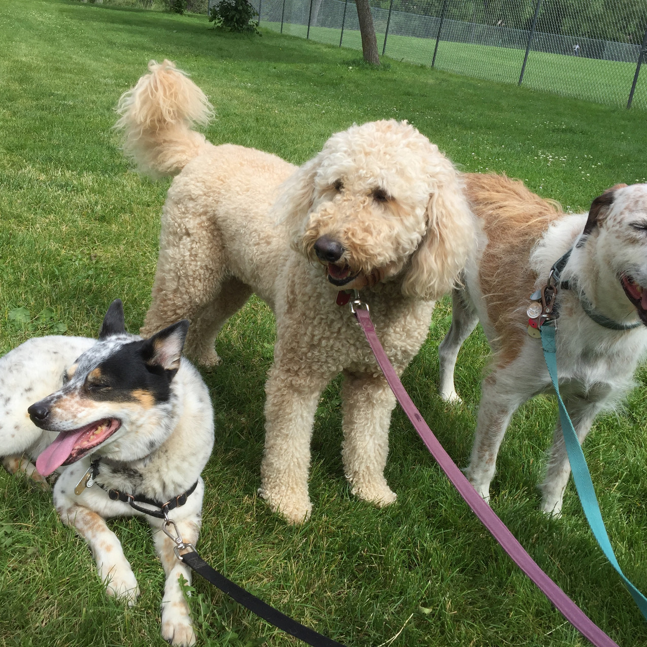Isaac, Zoey, Griff