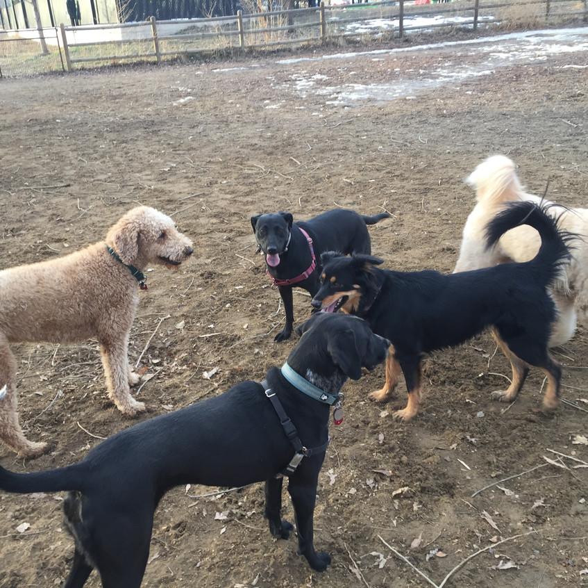 Milo, Avo, Poppy, Riley, Zoey