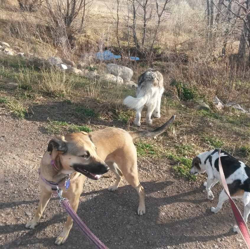 Colby, Thompson, Stella