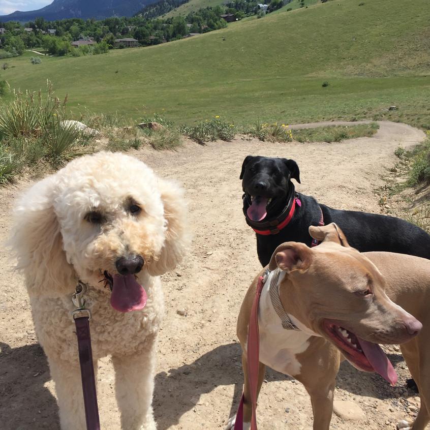 Zoey, Poppy, Rey