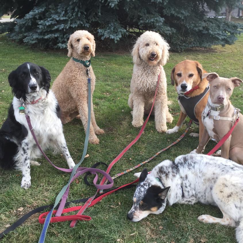 Ruffers,Milo,Zoey,Cooper,Rey,Isaac