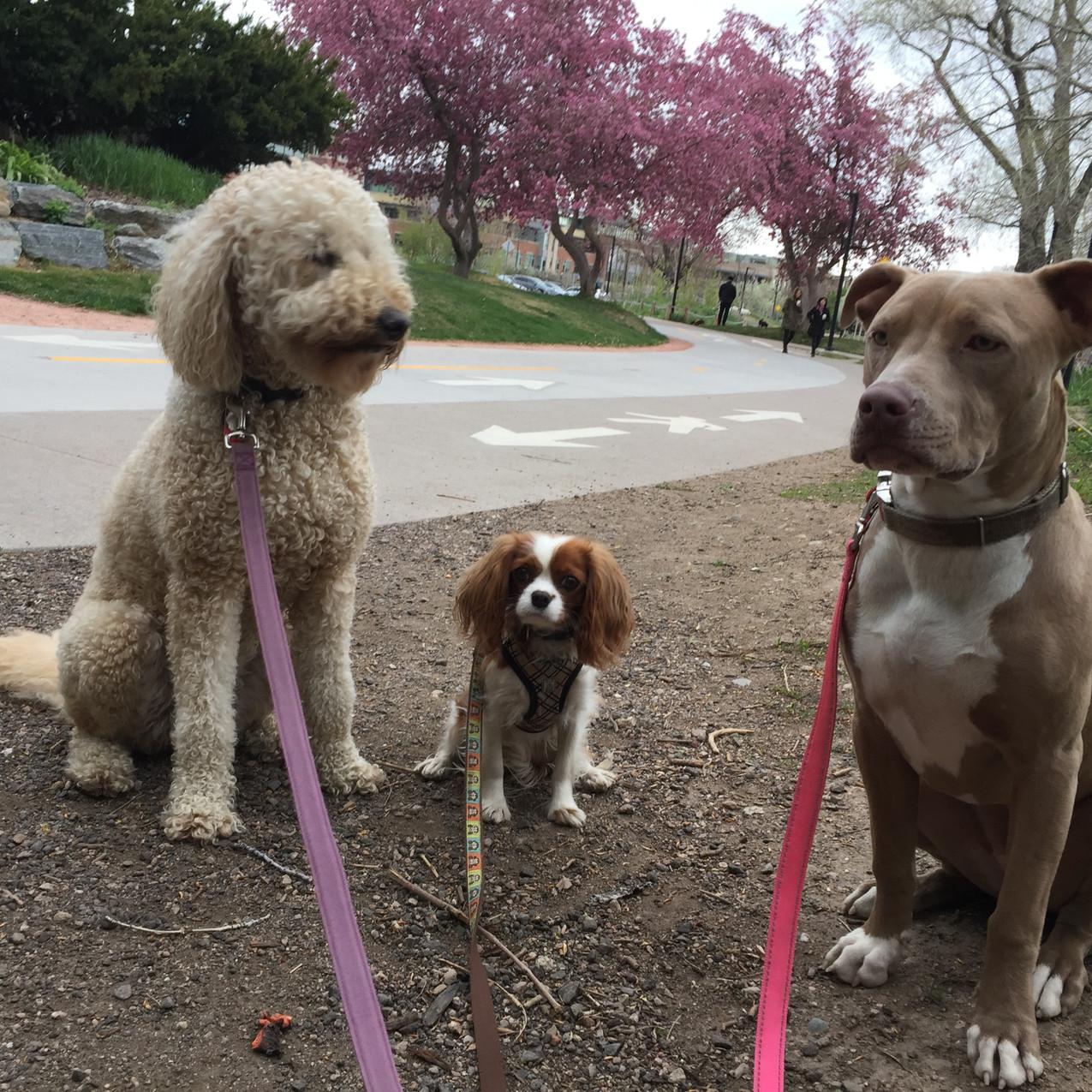 Zoey, Zoe, Rey