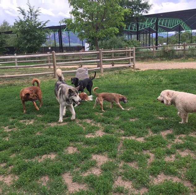 Ruby, friend, Avo, Zoe, friend, Zoey