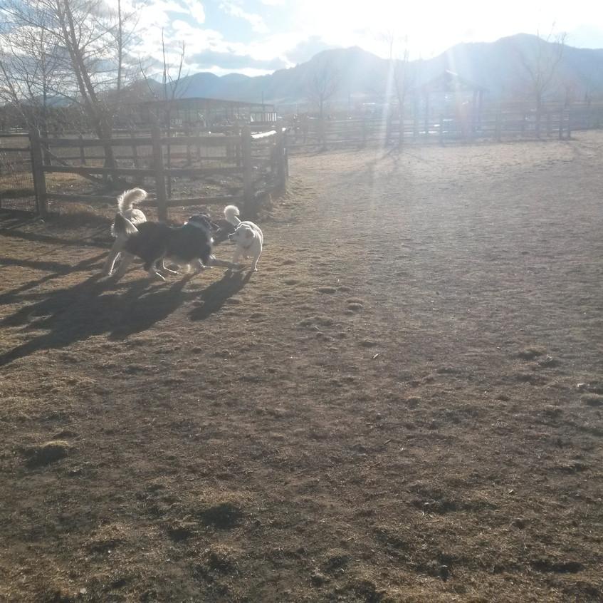 Zoey, Ruffers, friend