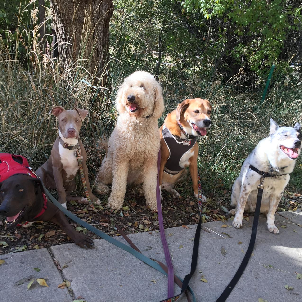 Coco, Rey, Zoey, Cooper, Isaac