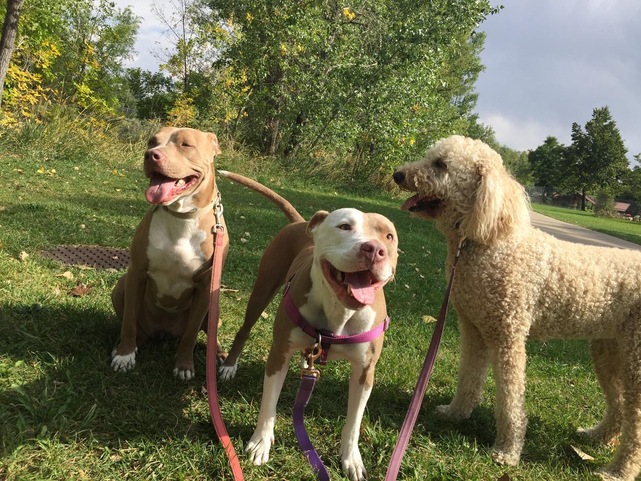 Rey, Lou, Zoey