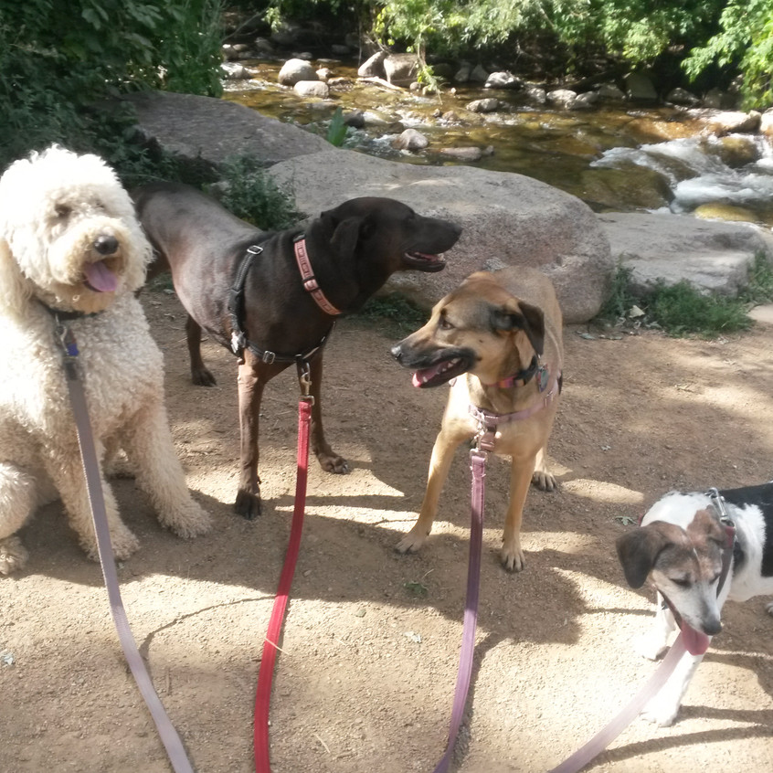 Zoey, Coco, Colby, Stella