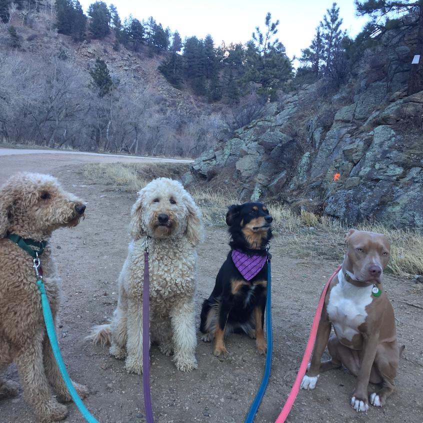 Milo, Zoey, Riley, Rey