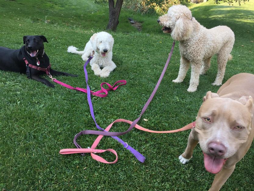 Poppy, Imogene, Zoey, Rey