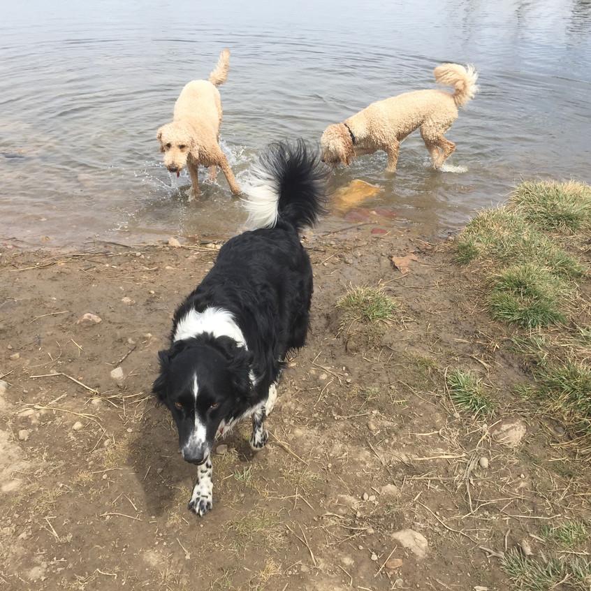Milo, Ruffers, Zoey