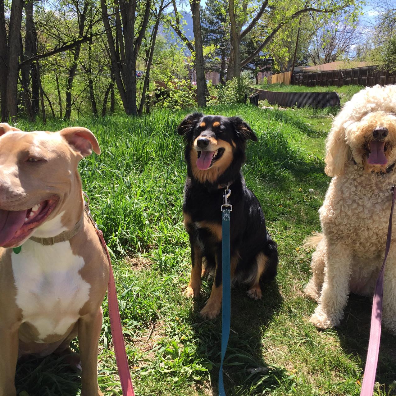Rey, Riley, Zoey
